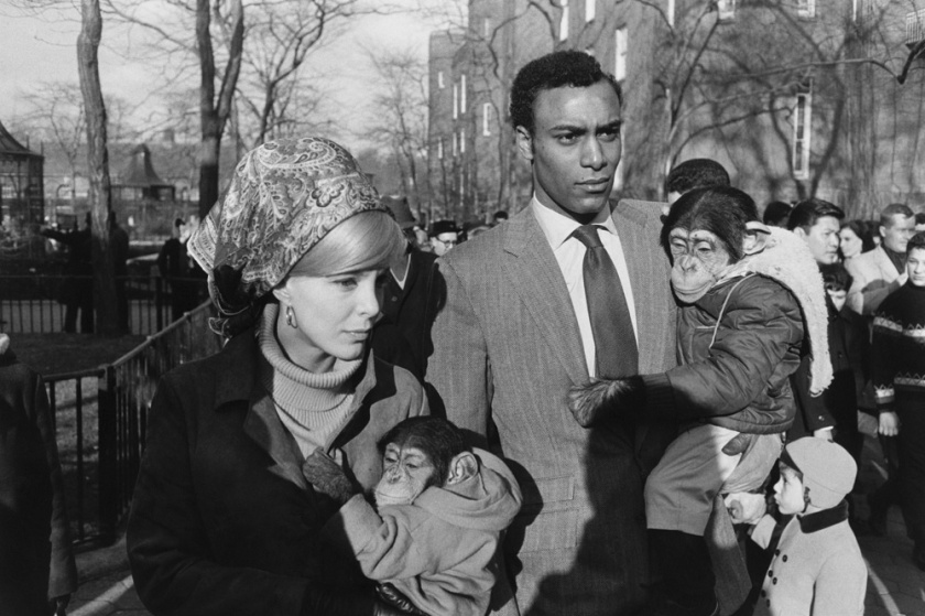 Garry Winogrand. Central Park Zoo, New York, 1967.