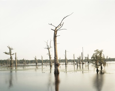 Richard Misrach, Cypress Swamp, Alligator Bayou, Prairieville, Louisiana, negative 1998, print 2012
