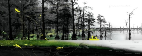 Human mismanagement is turning lush cypress trees into ghostly poles, jeopardizing Louisiana's bayou ecologies, local economies, and cultures. Requiem for a Bayou. From Petrochemical America, photographs by Richard Misrach, Ecological Atlas by Kate Orff (Aperture 2012).