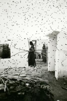 Graciela Iturbide Cementerio (Cemetery), Juchitán, Oaxaca, 1988