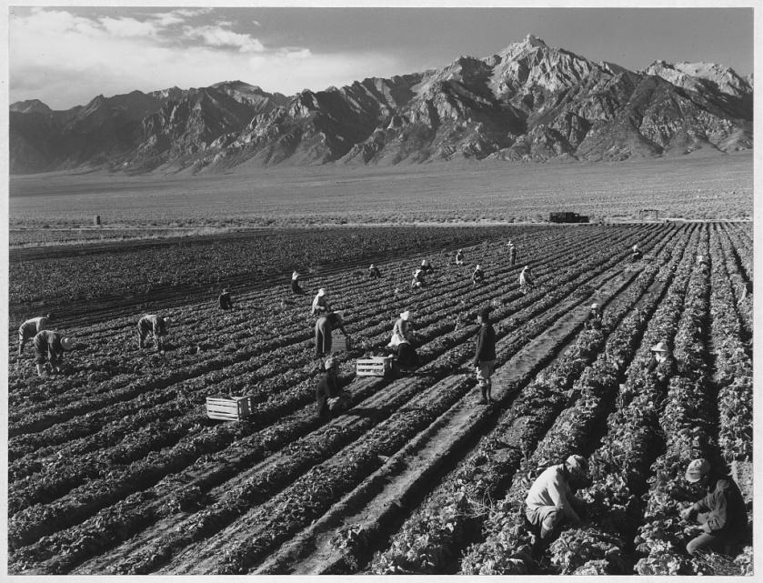 Ansel Adams. Manzanar Relocation Center, California.  Farm, farm workers, Mt. Williamson in background.