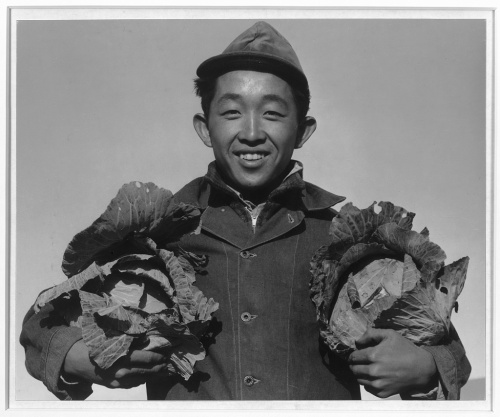 Ansel Adams. Manzanar Relocation Center, California. Richard Kobayashi, farmer with cabbages.