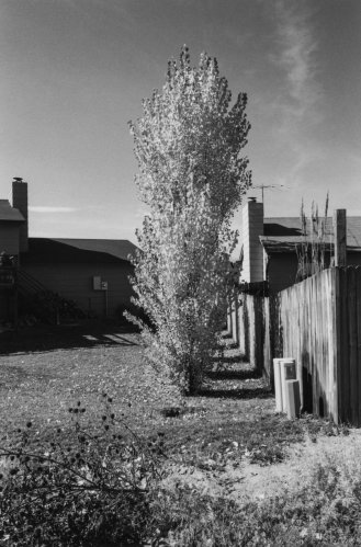 Robert Adams, Arvada, Colorado, from the series Gone? Colorado in the 1980s, 1984-1987