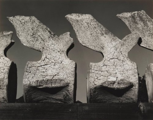Edward Weston, Whale Vertebra, 1934